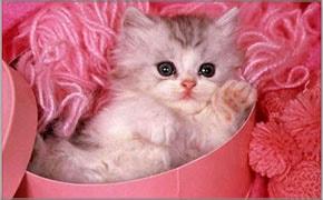 Meu primeiro filhote gatinho blog finofaro