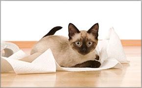 meu primeiro filhote papel higienico finofaro blog