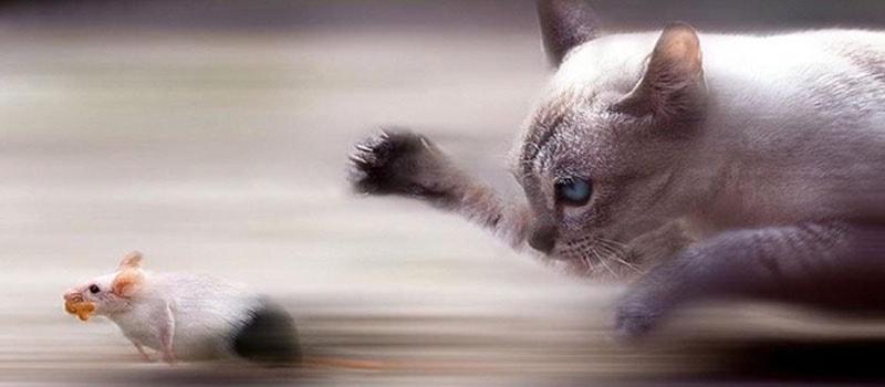 A Psicologia Felina e sua alma verdadeira - Blog Finofaro