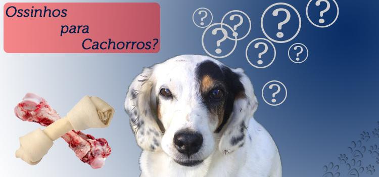 Ossinhos para Cachorros, as opções e os cuidados