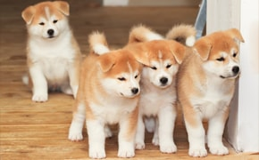 Desmame do cachorro como e quais cuidados tomar - Finofaro Blog