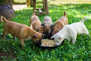 Desmame do cachorro como e quais cuidados tomar - Blog Finofaro