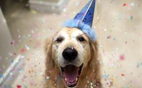 Dicas para fazer uma festa de aniversário para cachorro