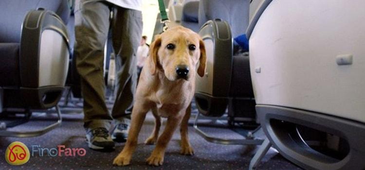 Como viajar com seu Cachorro ou gato, dicas importantes - Finofaro