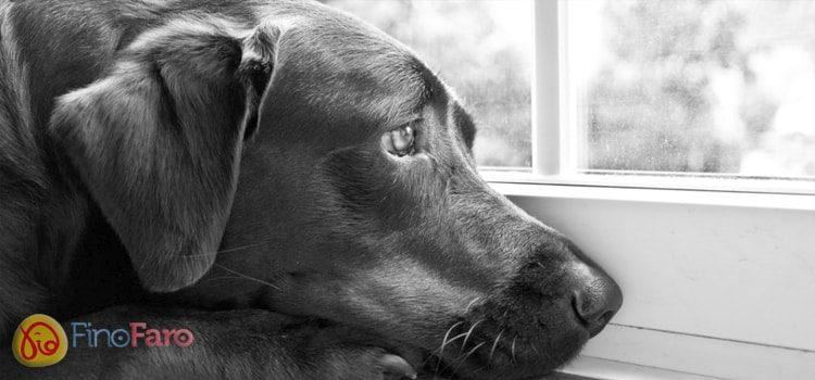 Dicas para deixar o seu cão sozinho em casa