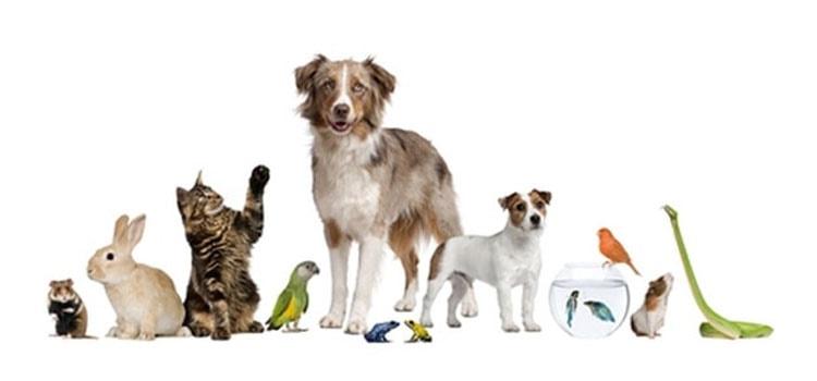 Animais domésticos – Origem e História - Finofaro