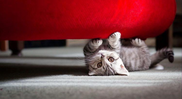 Por que os gatos amam arranhar os móveis da casa? FinoFaro Pet Shop