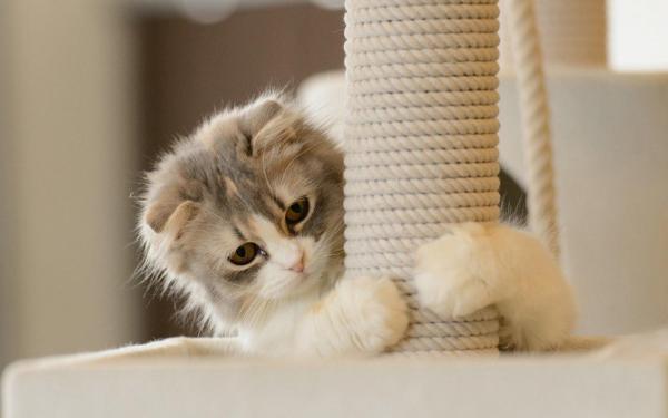 Ter umgatoé sinônimo de alegria, carinho e, claro,móveis arranhados. Ainda que os donos dos felinos aceitem as excentricidades dosbichanossem reclamar, a verdade é que esse costume de arranhar as coisas, típico dos gatos, pode estragar móveis, portas e paredes.