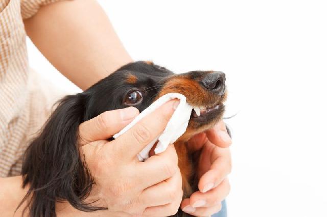 Quem tem um animal de estimação em casa sabe como é difícil fazer com que ele fique quieto na hora de escovar os dentes. Mas a higiene oral dos pets só é eficiente quando realizada diariamente. Ajuda a prevenir desde tártaro, cáries e placas bacterianas até doenças bucais mais graves, como a periodontite.