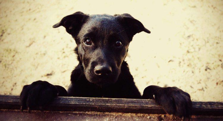 Vira latas e Cães Mestiços - Tudo sobre os cães sem raça definida