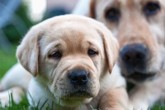 Como calcular a idade real dos cachorros com uma calculadora