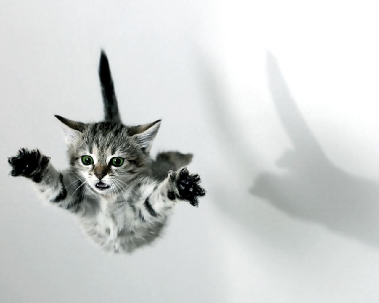 Porque os gatos caem em pé? Saiba o porque e se é sempre assim!