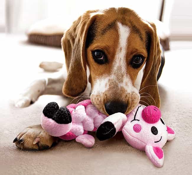 Descubra os Benefícios dos brinquedos para Cães, diversão, saúde.