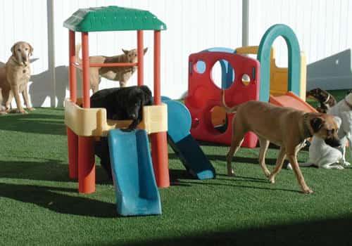 Creche de cachorro, onde deixar seu Pet, e como escolher o Hotelzinho?