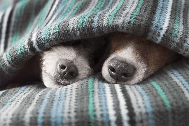 Saiba por que o nariz do cachorro é gelado, úmido e frio