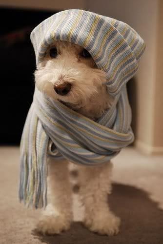 Os melhores looks de inverno para o seu pet, como deixar seu cão lindo