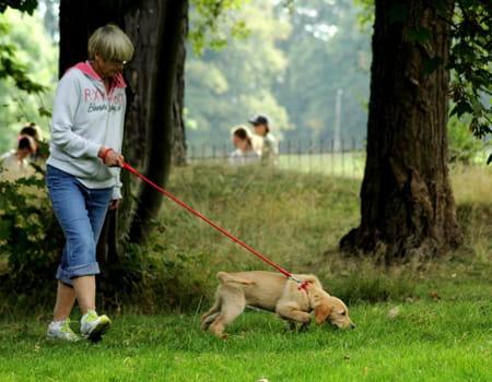 Cães com problemas comportamentais - Principais Causas