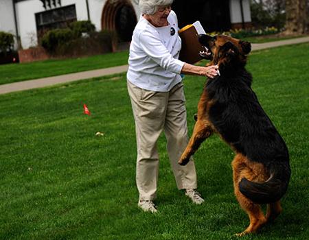 Cães com problemas comportamentais - quais são os mais comuns