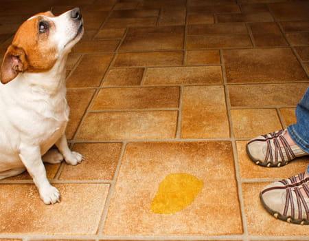 Dicas para ajudar solucionar problemas comportamentais mais comuns em cães