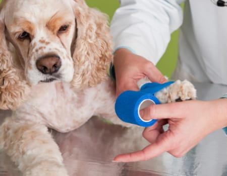 Fisioterapia para Cachorro – Métodos Eficazes