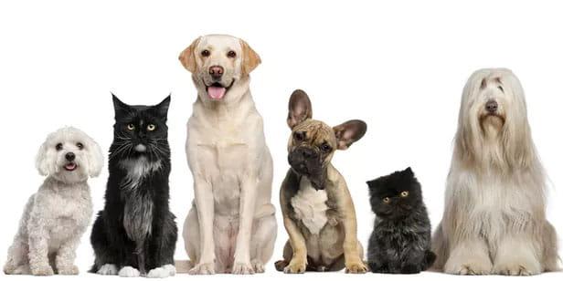 Será que cachorro tem signo? Descubra a personalidade do seu Pet