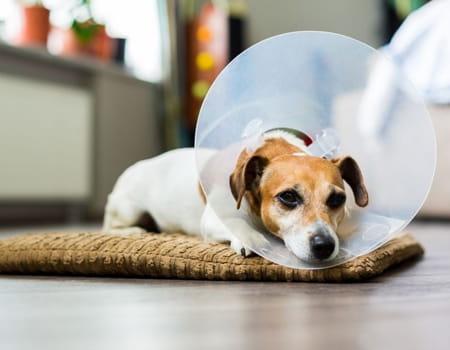Entenda tudo sobre castração de cães e gatos e seus benefícios